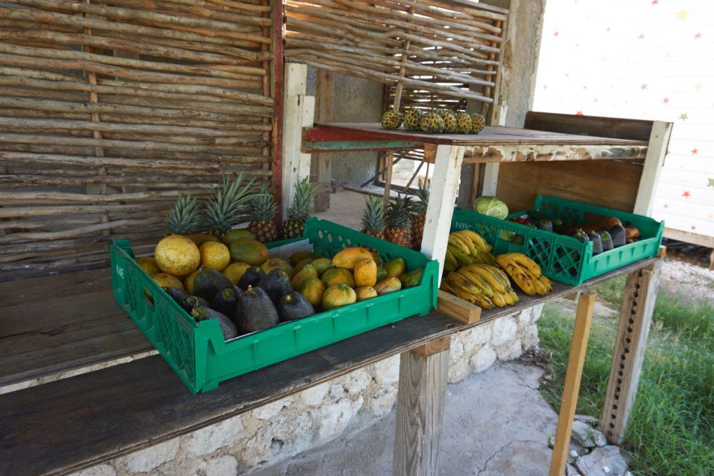 jamaica_2015_DSC01920